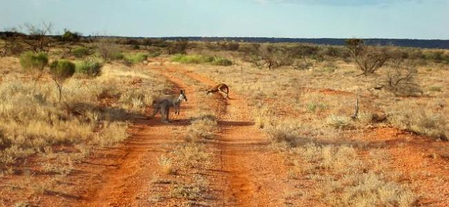 Den australske outbacken
